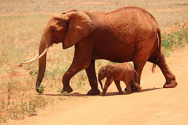 elephant-175798_960_720.jpg