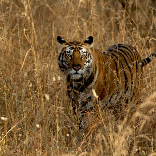 CULTURAL INDIA & WILDLIFE SAFARI TOUR