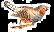 bird 1 png.png
