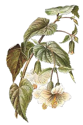 leaves png.png