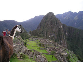Lama mit Machu Picchu