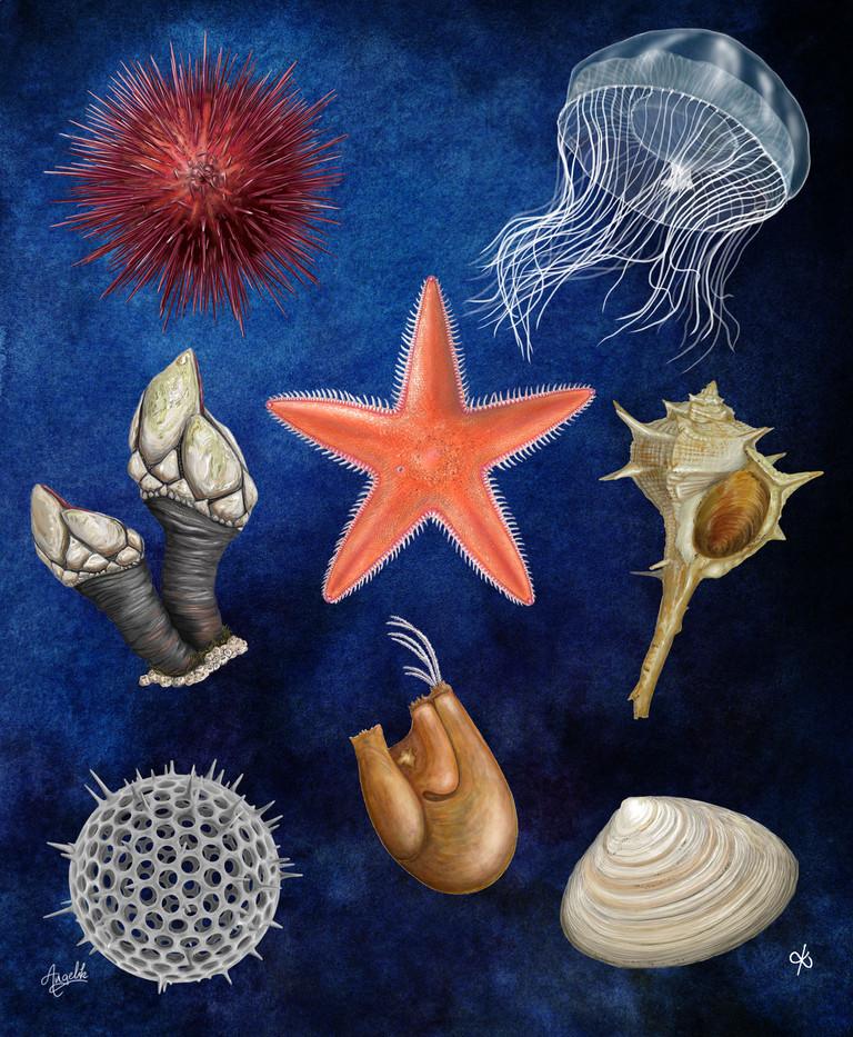 Intertidal zone organisms panel