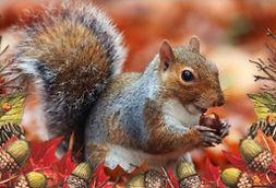 whydosquirrelshidetheirnuts.jpg