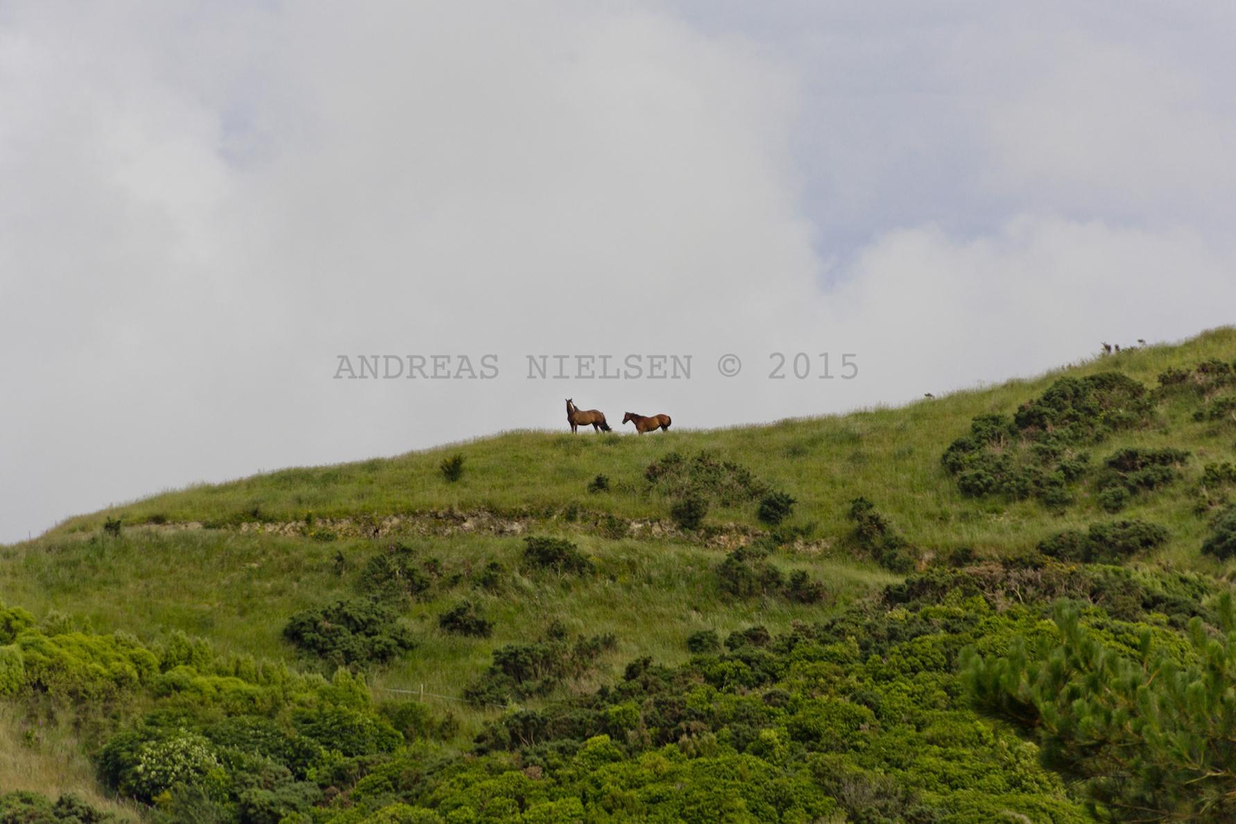 Heste i newzealandsk landskab.