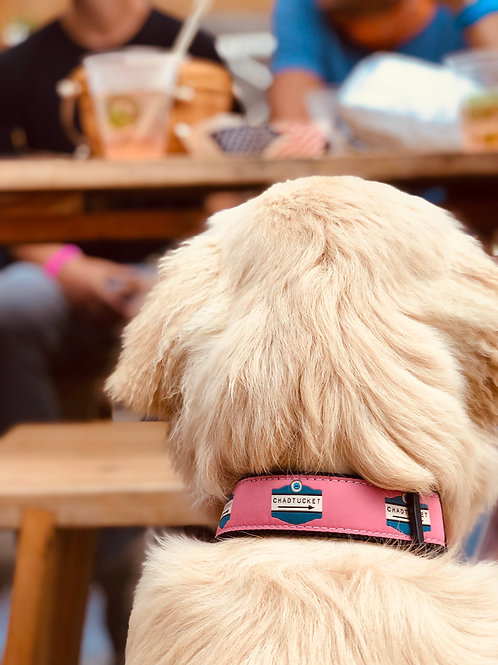 YRI Ribbon Dog Collar