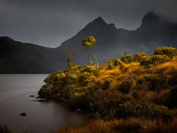 The Dove Lake Tree