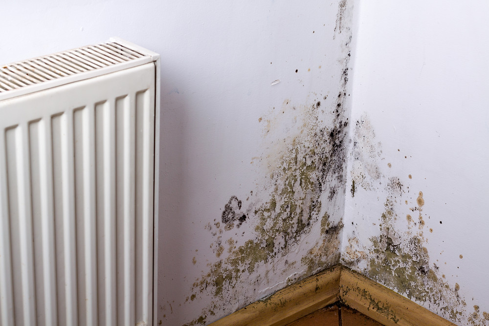 Mould in rental properties