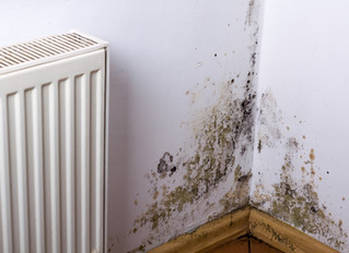 Who is Responsible for Mould in a Rental Property?
