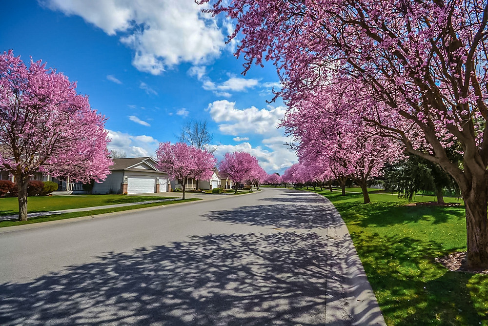 How to Prepare a Rental Property for Spring