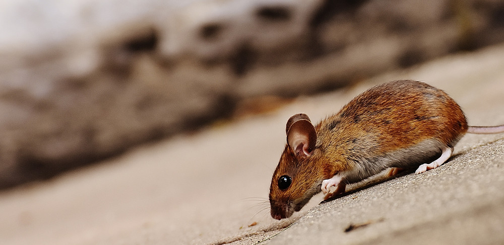 How to Prevent Pest Infestations in Your Rental Property