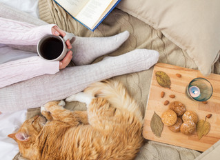 Advice for Renting Properties to Pet Owners After the Tenant Fees Act