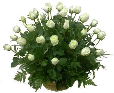 Rosas en su memoria