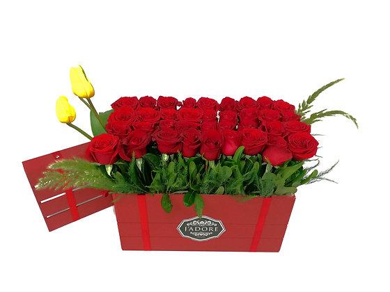 Rosas Asertivas
