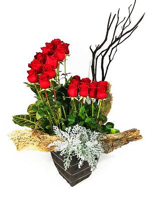 Rosas Suances