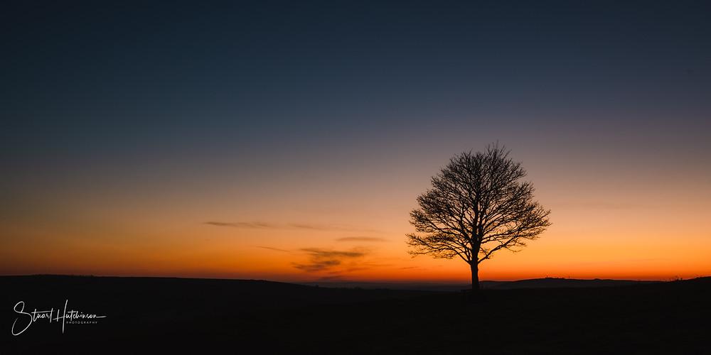 Lone tree on Cissbury Hill at Sunrise