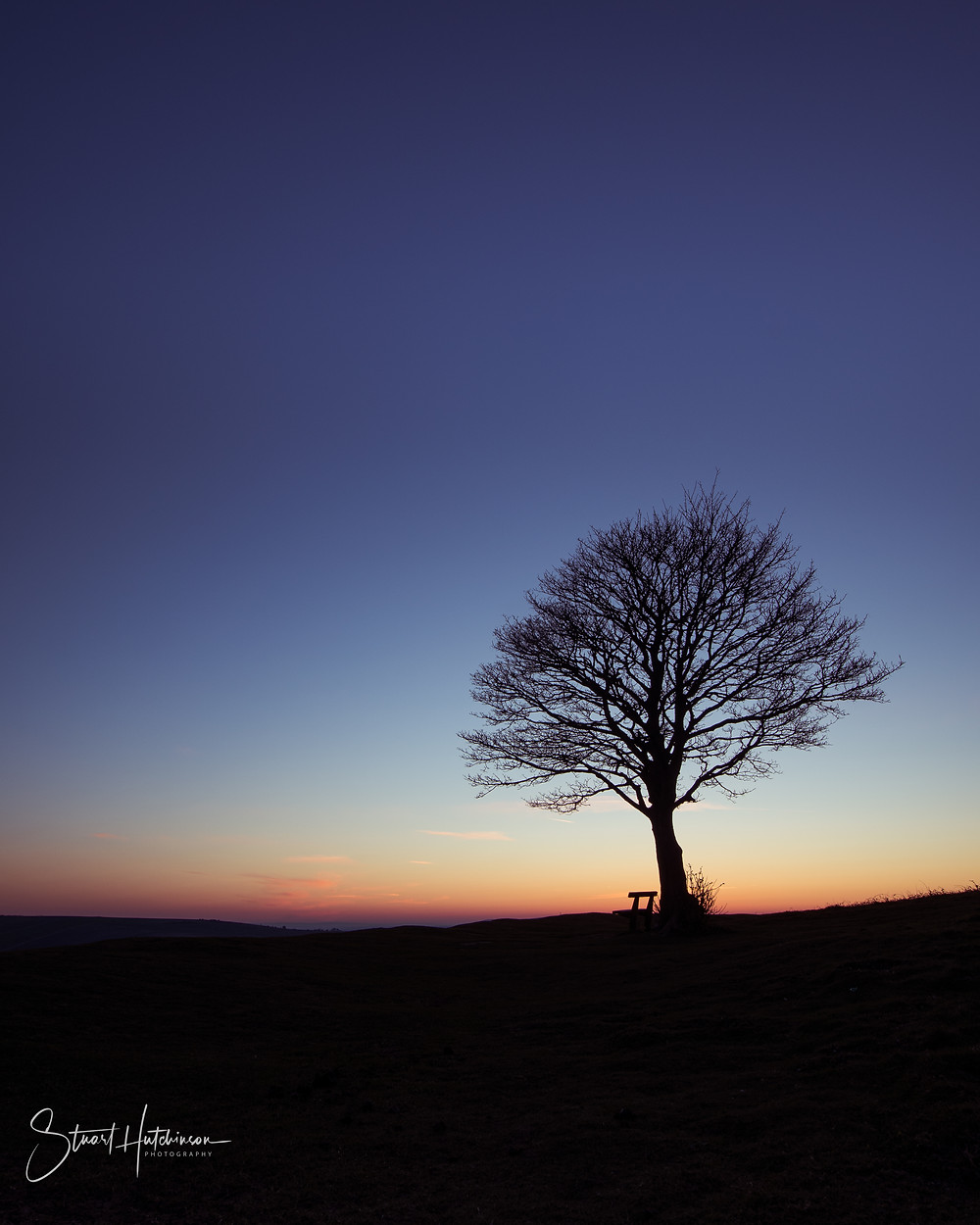 Lone tree and bench on Cissbury Hill at Sunrise
