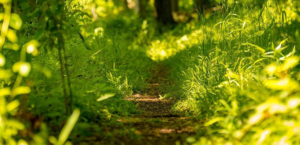 grassy-path-2.jpg