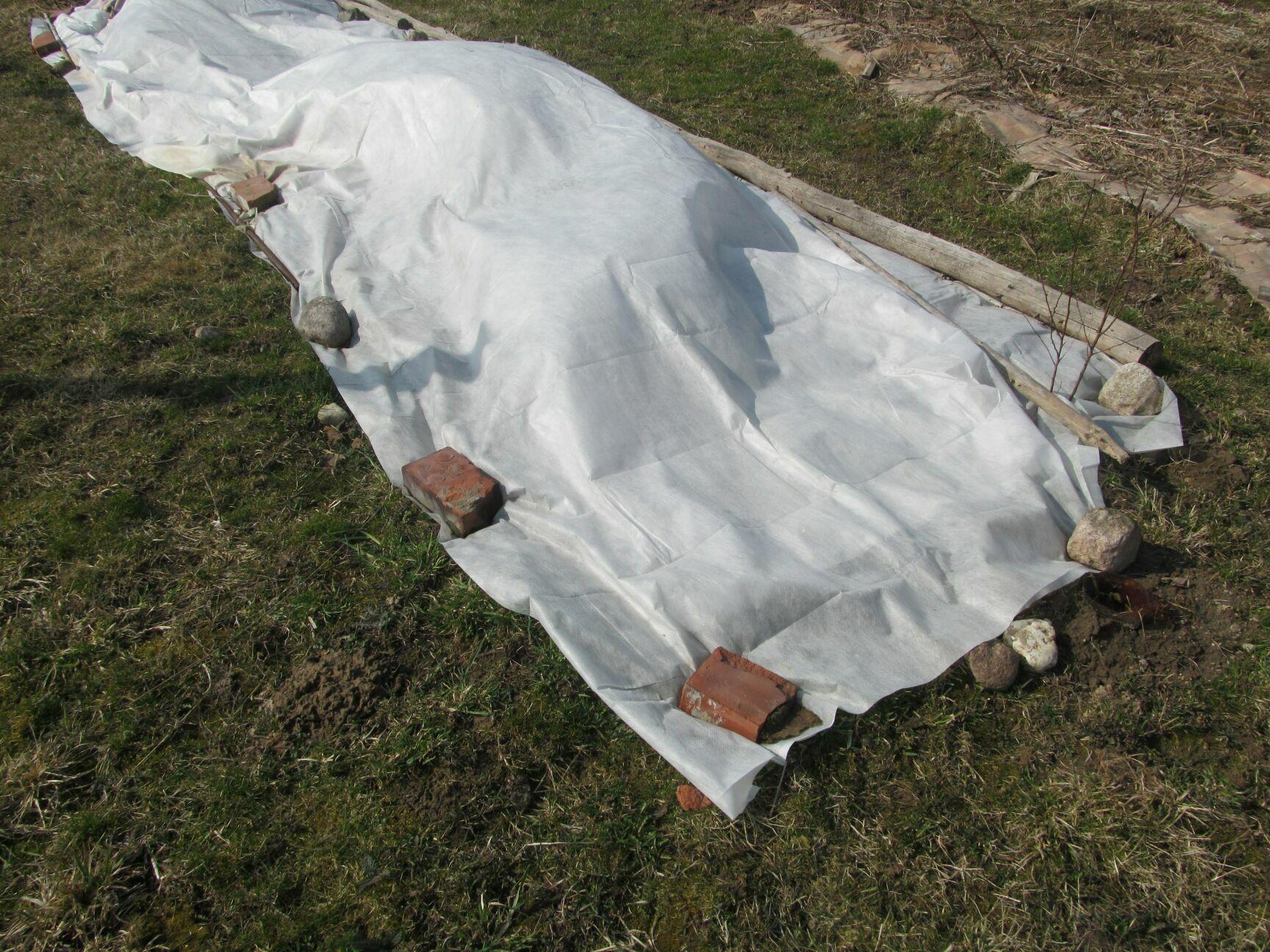 Подготовка к зиме ежевики