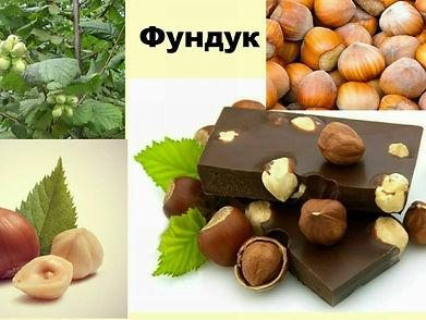купить саженцы фундука в Минске