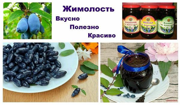 Жимолсть купить в Минке | саженцы жимолости в Беларуси с доставкой в Москву