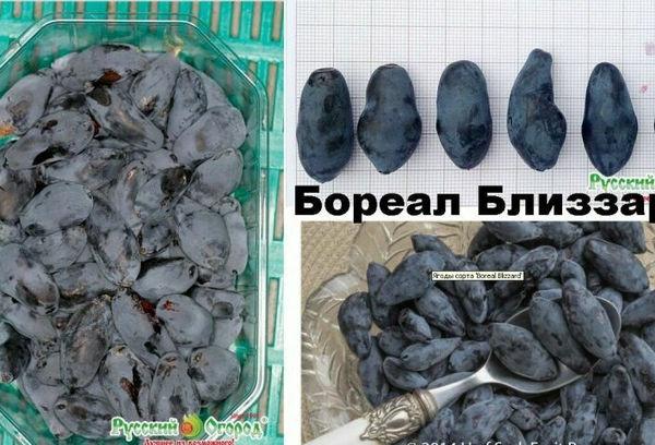 купить Бореал Близзард в Беларуси