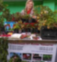 ягода-клубника алла чамата