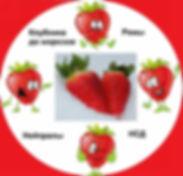 купить ремонтантную клубнику в Беларуси