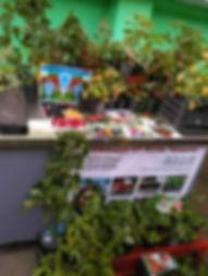 Забрать заказ на Комаровке, где купить саженцы, Ягода-Клубника в Минске,  телефон Аллы Чаматы +375 29 779 19 92