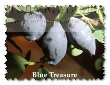 Голубое сокровище+.png