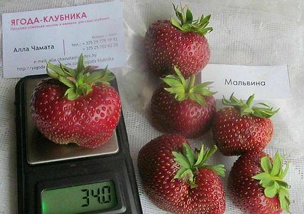 алла чамата сайт ягода-клубника