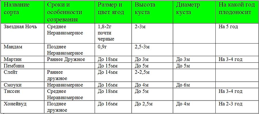 купить саженцы ирги | саженцы канадской ирги в Минске , доставка по Беларуси, России, Казахстану