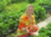 Купить саженцы клубники Анита в Минске