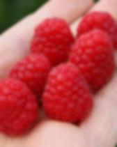 купить летнюю малину в Беларуси