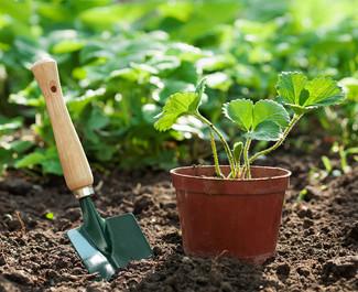 Словарик садовода