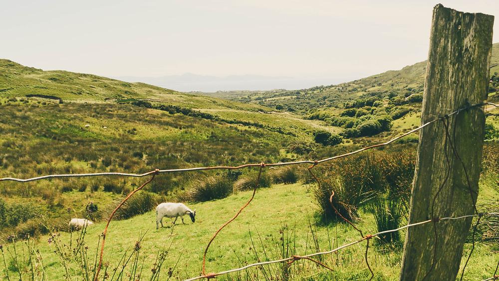 Twelve Day Roadtrip to Ireland