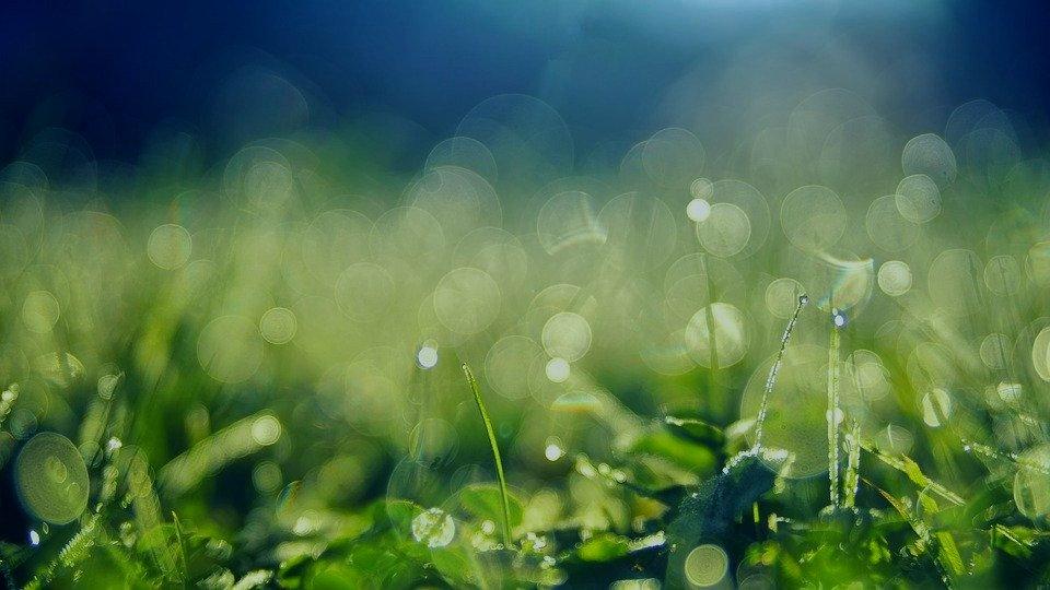 meadow-3743023_960_720_edited_edited.jpg