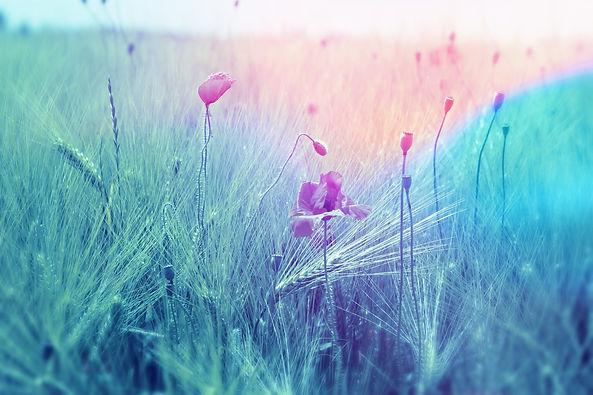 meadow-2369426.jpg