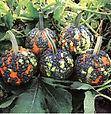 Pumpkin Miniwarts.jpg