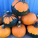 Pumpkin Batwing.jpg