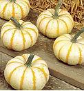 Pumpkin Lil Pump-Ke-Mon.jpg
