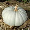 Pumpkin Flat White.jpg