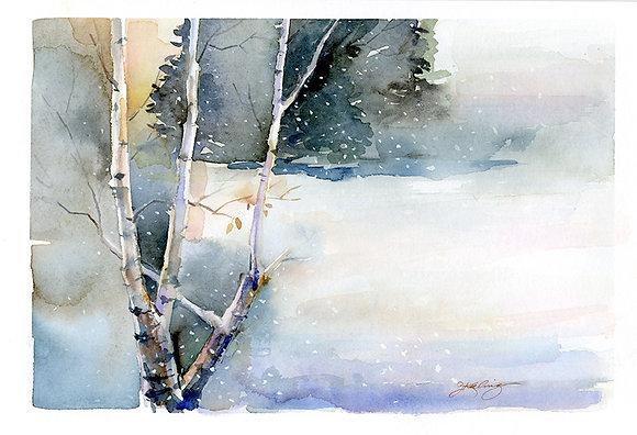 Birch in Snow - Prints