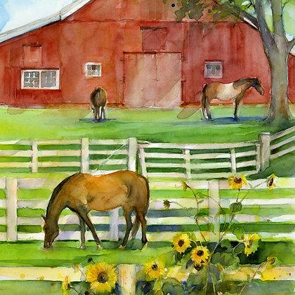 Paddock-Barn Sunflowers w/Sunflowers - Prints