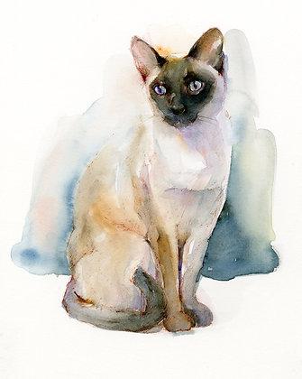Siamese Cat - Prints