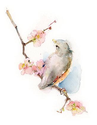 Baby Robin on Branch - 8x10