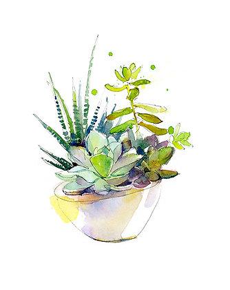 Succulents - Prints