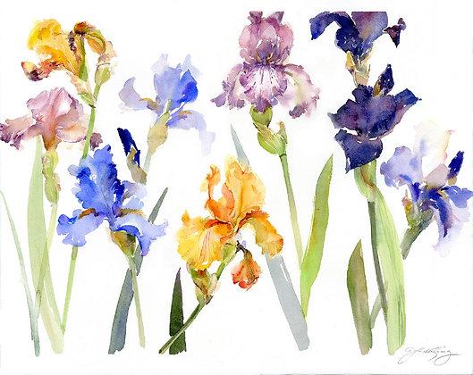 Iris Botanical - 11x14