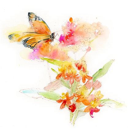 Milkweed w/Monarch Botanical - Prints