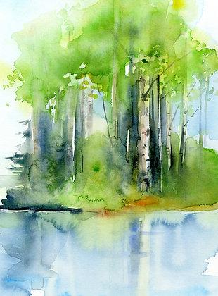 Birch Reflection - Prints