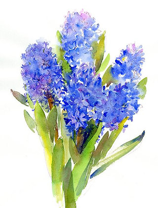 Blue Hyacinth - Prints
